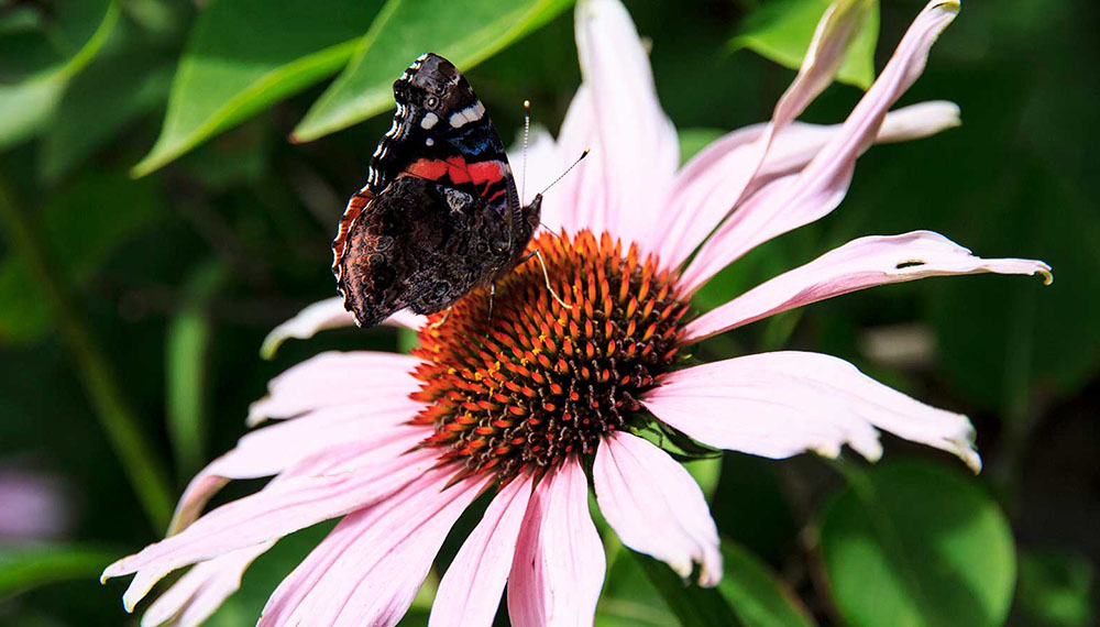 pollinator plants in your garden